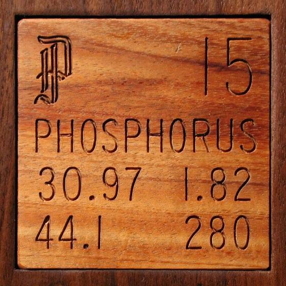 Phosphorus is essential for strong bones and teeth
