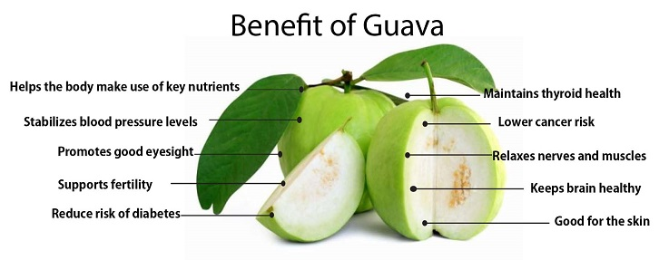 Guavas are great stress busters