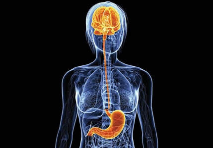 gut microbiome can affect inflammation